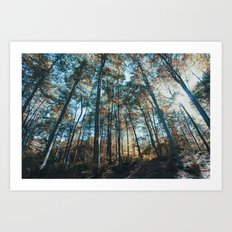 into the woods 07 Art Print