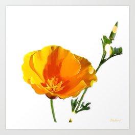 Cali Poppy Art Print