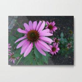 Purple Coneflower Metal Print