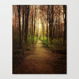 Woodland Wander Canvas Print