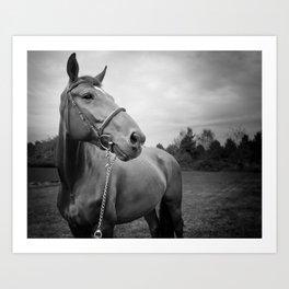 Horses of Instagram Art Print