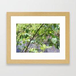 Leaves and Branches at Black Bayou, Monroe, Louisiana Framed Art Print