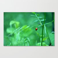 ladybug Canvas Prints featuring Ladybug by Arevik Martirosyan