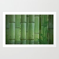 bamboo Art Prints featuring Bamboo by Anne Seltmann