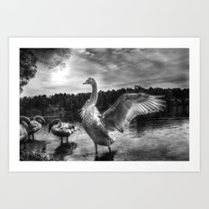 Swan lake in black and white Art Print
