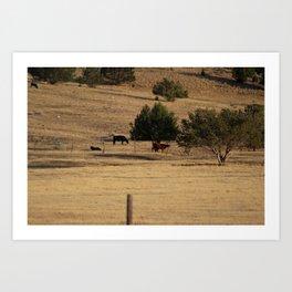 Cows in Utah Pastureland Art Print