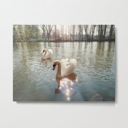 swans floating on the river Metal Print