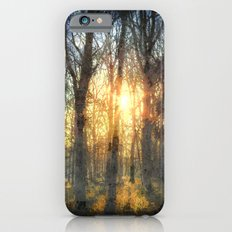 Early Morning Forest Art iPhone 6s Slim Case