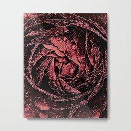 The Spring Rose, Romantic Ranunculus Metal Print