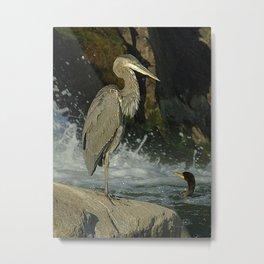 Heron & Cormorant Metal Print