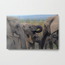 Addo Elephant National Park Metal Print