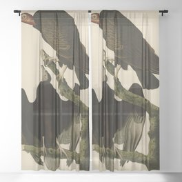 Turkey Buzzard Sheer Curtain