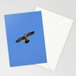 Peregrine falcon 3 Stationery Cards