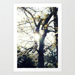 Golden Moss Art Print
