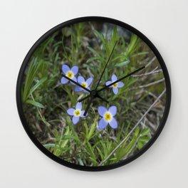 Thyme Leaved Bluets Wall Clock