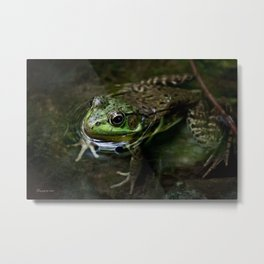 Frog Floating Metal Print