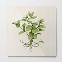mint plant yoga Metal Print