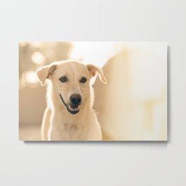 Canine 8 Metal Print