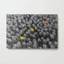 Tulips [Colour on Black and White] Metal Print
