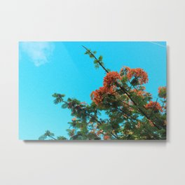 Blooming Orange Metal Print