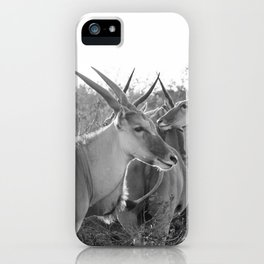 Herd of Eland stand in tall grass in African savanna iPhone Case