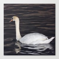 black swan Canvas Prints featuring Swan by WonderfulDreamPicture