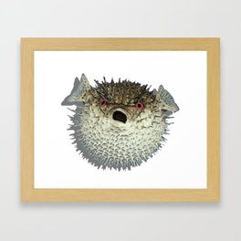 Angry little fish Framed Art Print