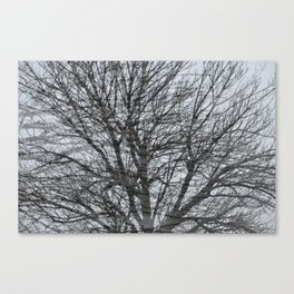 Dry Canvas Print