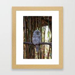 Ural owl resting on a branch Framed Art Print