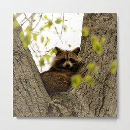 Happy in her hideout Metal Print