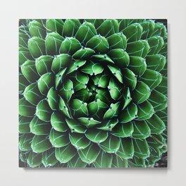 Queen Victoria Agave Cactus Succulent Metal Print