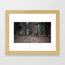 Trunks Framed Art Print