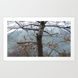 Tree trunk after a spring shower Art Print