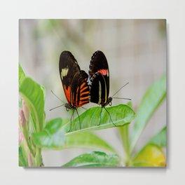 Butterfly Pair Metal Print