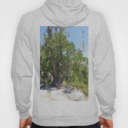 road trip, tree, non typical Hoody