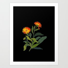 Calendula Officinalis Mary Delany Floral Paper Collage Delicate Vintage Flowers Art Print