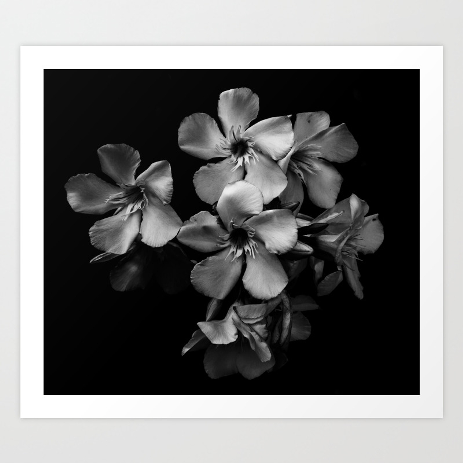 Oleander flowers in black and white art print by vanessagf society6