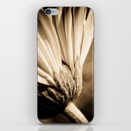 Sepia Gerbera iPhone Skin