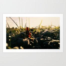 Cherry Fields Art Print