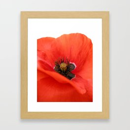 poppy II Framed Art Print