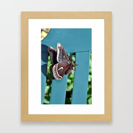 Ceanothus silkmoth hanging out 1 Framed Art Print