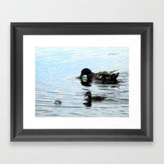Duck 03 Framed Art Print