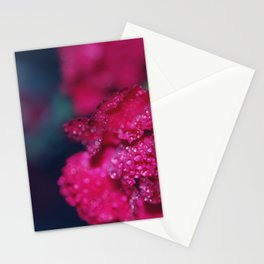 Carnations Stationery Cards