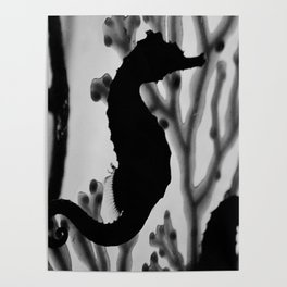 Seahorse Silhouette Poster