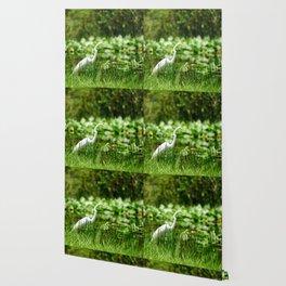 Great Egret in a Green Field Wallpaper