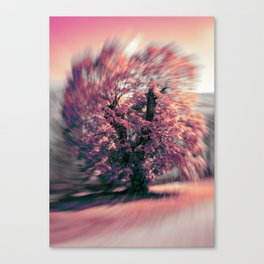 The tree of spring Canvas Print