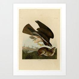 372 Common Buzzard Art Print