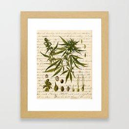 Marijuana Cannabis Botanical on Antique Journal Page Framed Art Print