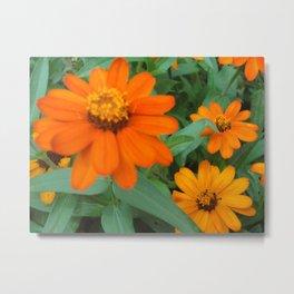 Orange Echinacea Sombrero Coneflowers Metal Print