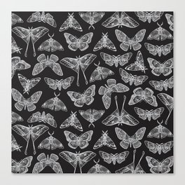 Lepidoptera Black & White Canvas Print